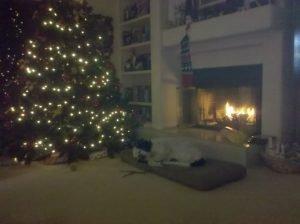 Louie-Christmas