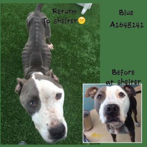 Blue at shelter